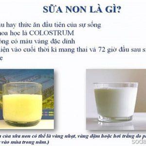 Sữa non là gì ? Tổng hợp các tác dụng tuyệt vời của sữa non