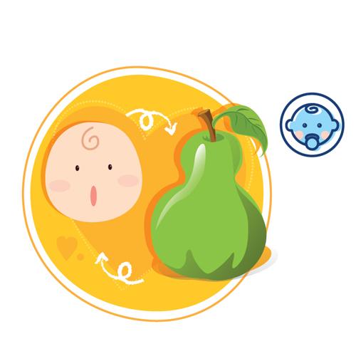 Sự phát triển của thai nhi tuần thứ 34